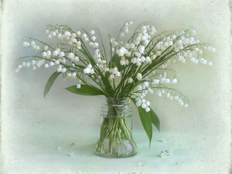 lily-of-the-valley-for-katica-crozg